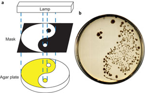 E. coli grown on an agar plate containing UV-activated antibiotic shows the pattern from a template held between it and the lamp. © Nature Chemistry