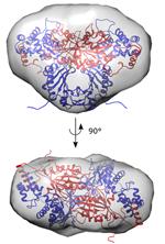 Parkinson-eiwit