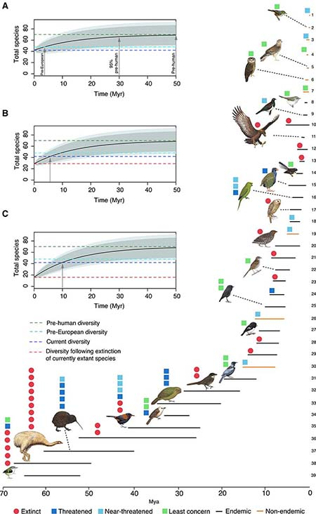 Figure - Colonization Times and Evolutionary Return Times for Total Number of Species