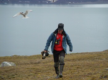 Loonen with a goose, ignoring the excited Nordic terns (photo Suzanne Lubbe)