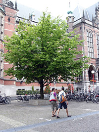 'Tree of Knowledge'