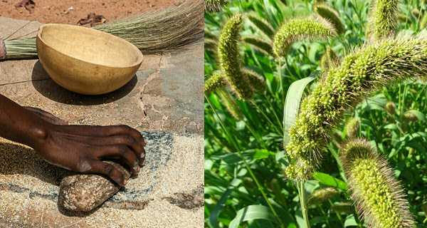 Millets: ancient crops for the future