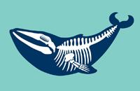 Doortje de walvis
