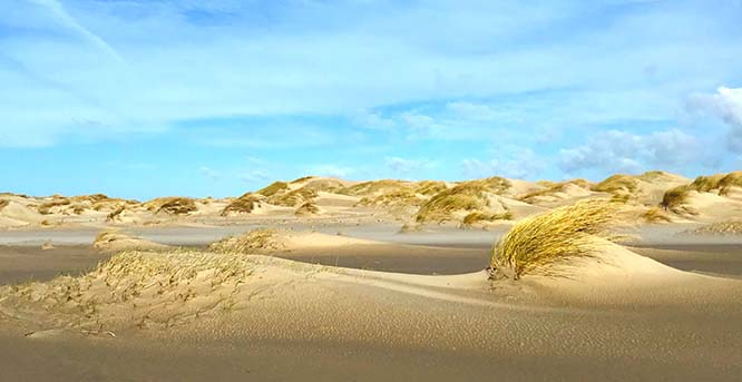 Small steps, big leaps - how marram grass builds dunes