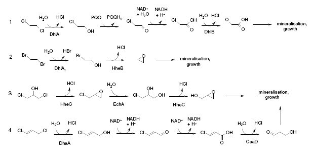 Biodegradation of halogenated pollutants | Research ...