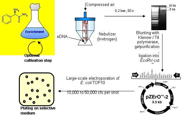 Gbb Rug Gbb Nam Vonnis Is Steun In De Rug Voor Ons Rtv Noord New Biocatalysts From
