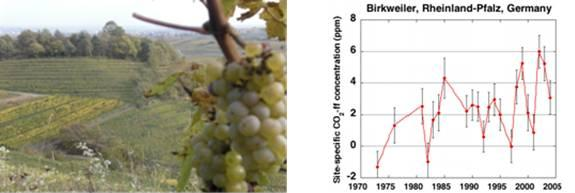 Uptake of atmospheric 14CO2 by vines; Temporal variation in atmospheric fossil fuel CO2