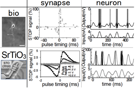 Behaviours of the biological synapse and neuron of a rat hippocampal neural cell (top row) compared with those of our artificial synapse and neuron made of a single SrTiO3 FET (bottom row). The coincidences are sufficiently good.