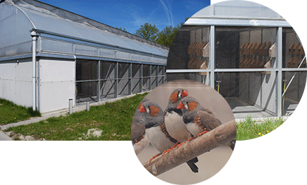 Small aviaries, zebra finches