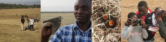 Kenyan larks and field sites