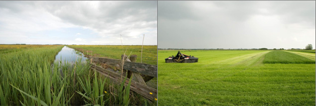 Herb-rich, extensively managed grassland (Koudum – Haanmeerpolder, left) and intensively used, herb-poor grassland (Koudum – Polder De Flait, right; photos: Rosemarie Kentie).
