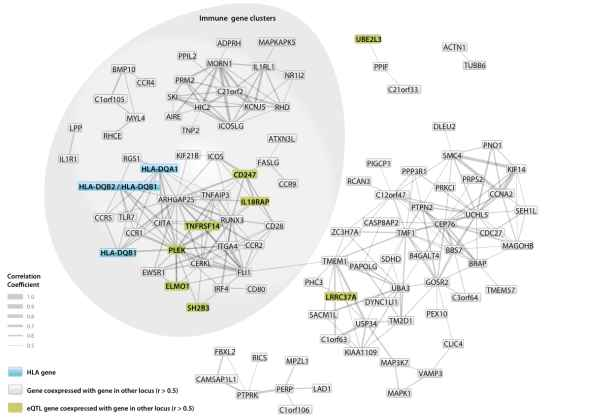 Networks of immune-related genes