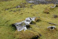 17th century whaling remains influence vegetation on Spitsbergen