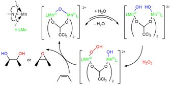 cis-Dihydroxylation and epoxidation of alkenes with hydrogen peroxide catalysed by Manganese complexes