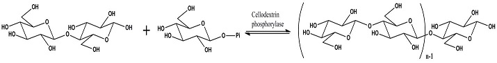 Figure 1. CdP catalysis of (oligo)cellulose synthesis.
