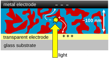 Fig. 2. Structure of typical BHJ solar cell illustrating how charges move in the donor (red) and the acceptor (blue) towards the electrodes.
