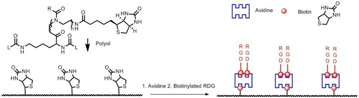 Figure 1. Lysine based polyurethane provided with biotin to anchor avidine.