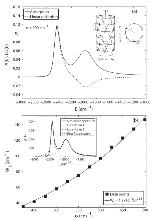 (a) Absorption and linear dichroism spectra of turbular J-aggregates. (b) The scaling anormalous behaviour of the width of the lowest absorption band as a function of disorder. [1]