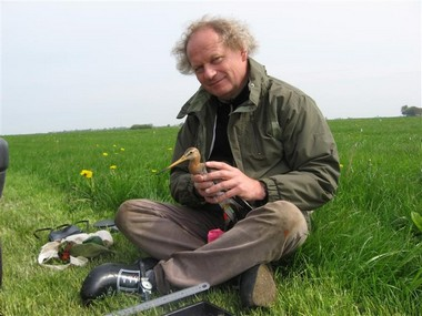 Prof. Theunis Piersma with a red knot in a Frisian meadow