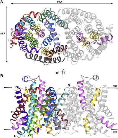 Protein structure from a paper by Paulino