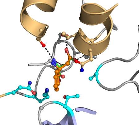 Softwarematige aanpassing van enzymen. De gewenste substraten zijn geplaatst in een model van het actieve centrum van het enzym. Vervolgens worden mutanten gemaakt en de computer zoekt naar enzymvarianten die een verbeterde omzetting van het substraat hebben. Deze mutatnen worden in het lab gemaakt en dan getest om de productiviteit te testen. | Illustratie Hein Wijma