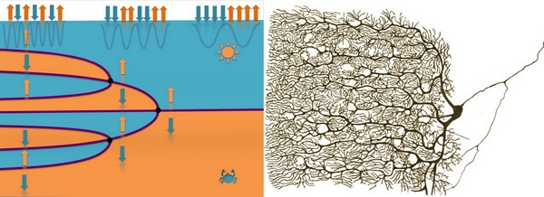 Similarity between doubling in domains in the material (left) and a bifurcating pyramidal neuron. | Image Noheda / Ramón y Cajal