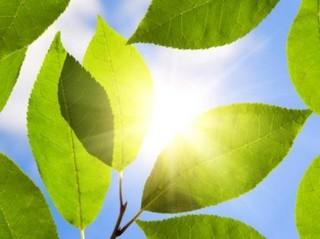 Brandstof maken uit zonlicht | Science LinX nieuws ...